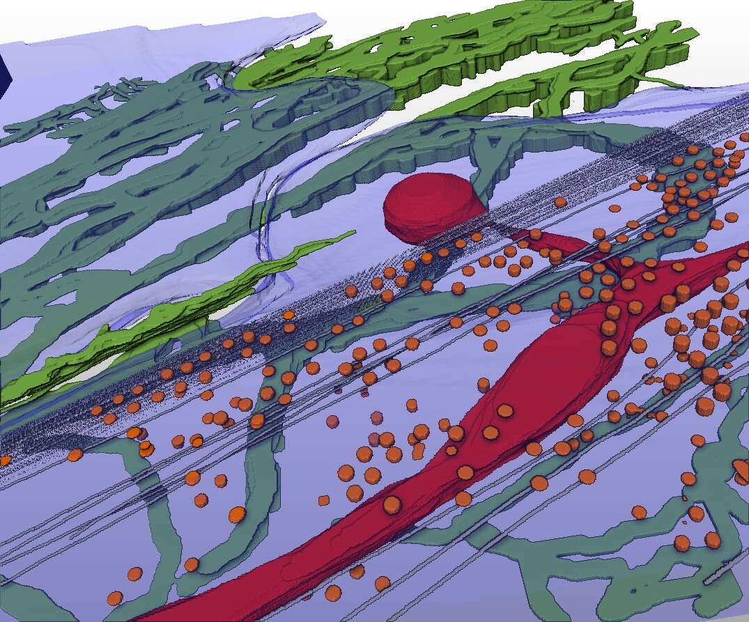 Figure 1: Segmentation of CSTET image showing a portion of a fibroblast cell (blue) lying over fibronectin filaments (green), and containing mitochondria (red), cytoskeleton (grey), and caveolae (orange).
